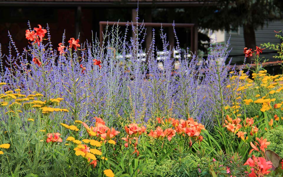 Secrist gardens fall blooming perennials a large choice of fall blooming perennials is offered as a reminder to gardeners who get so excited when purchasing spring blooming plants that they forget mightylinksfo