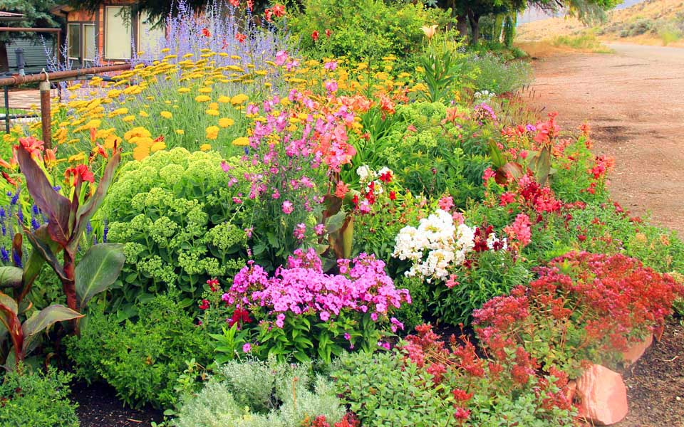 secrist gardens summer blooming perennials, Natural flower